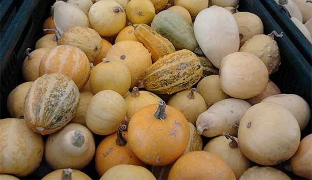 Calabazas en el Mercadillo del Agricultor de San Miguel | Foto: J. L. Conde