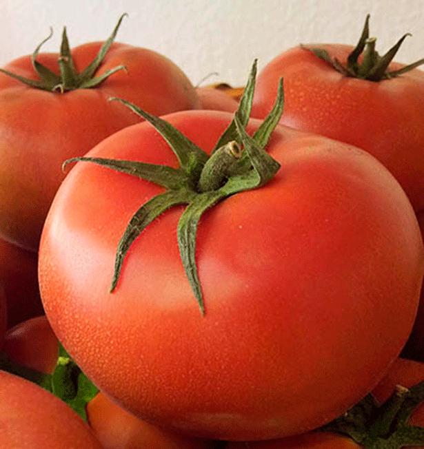 Tomates ecológicos de La Acequia, en La Laguna