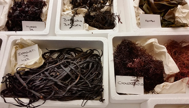 Variedades de algas que comercializa una empresa gallega   Foto: J.L.C.