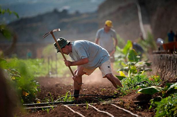 Los trabajadores en la finca de Cáritas   Foto: Fran Pallero