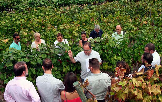 Cata de uvas en Bodegas Viñatigo