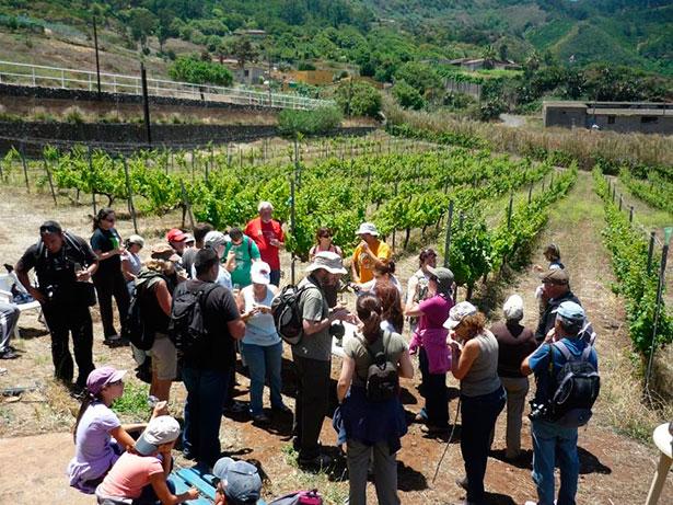 Imagen de una ruta entre viñedos organizada en Tegueste