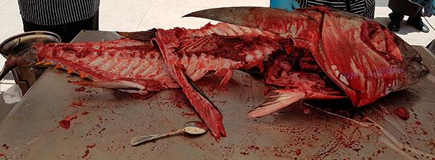 Un atún de más de 40 kilos, tras el ronqueo | Foto: J.L.C.