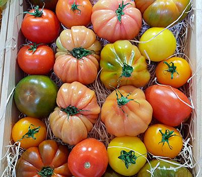 Variedades de tomates | Foto: J.L.C.