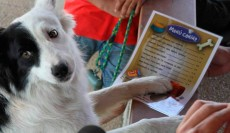 Los perros ya pueden disfrutar de un menú canino | Foto: perrosbuenos.com