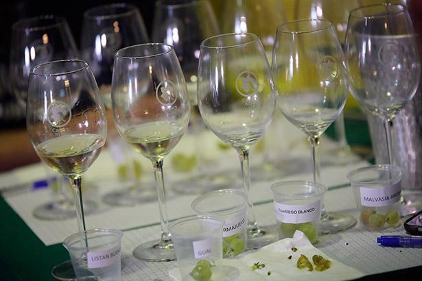 Vinos y uvas que fueron catadas en  la masterclass