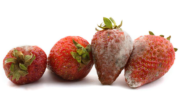 Frutas y verduras encabezan la lista del desperdicio alimentario | Foto: 0grados.com