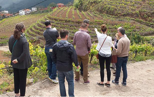 Durante una semana, los profesionales visitarán viñedos y bodegas