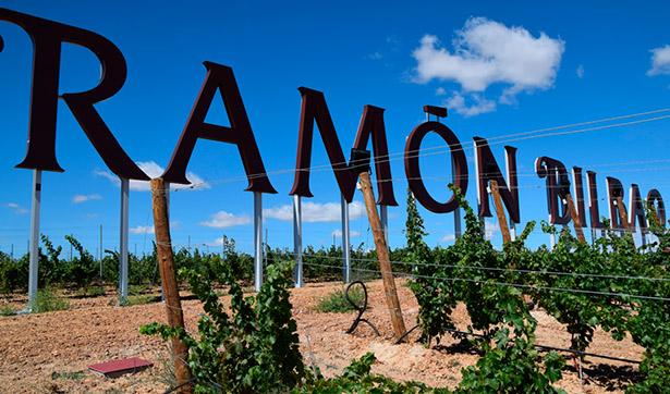 Imagen de los viñedos Ramón Bilbao | Foto: argi.es