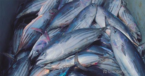 El atún y la pesca tradicional con anzuelo en Gran Canaria, protagonistas en Madrid Fusión | Imagen: Cabildo de Gran Canaria