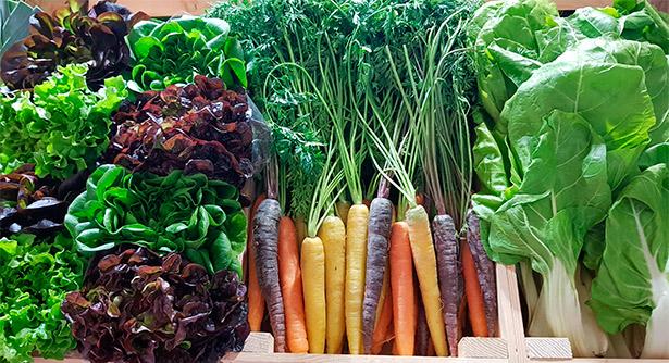 El plan pretende que los escolares de todo el Archipiélago se habitúen al consumo de alimentos más saludables | Foto: J.L.C.