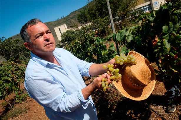 """""""Canarias en sí, cada zona, cada tierra, es diferente, aun siendo las mismas variedades""""   Foto: Fran Pallero"""