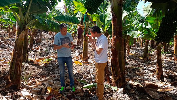 Los hermanos Torres, en una finca de plátanos de Tenerife | Foto: J.L. Conde