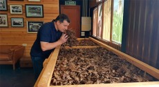 El sumiller de Can Roca, en un secadero de tabaco de La Palma