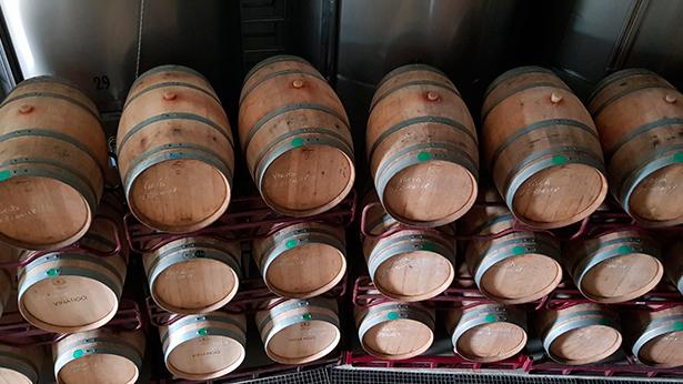 Los de este año serán vinos muy aromáticos, por la maduración progresiva de la uva | Foto: J. L. Conde