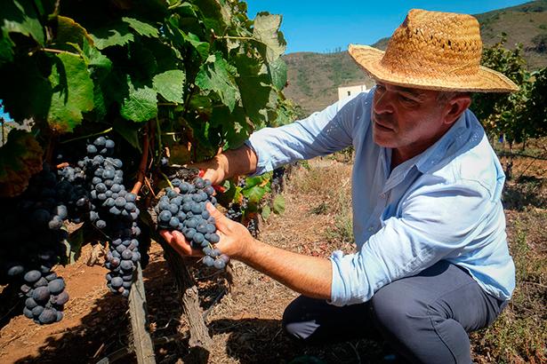 González, en los viñedos de Bodegas El Lomo | Foto: Fran Pallero