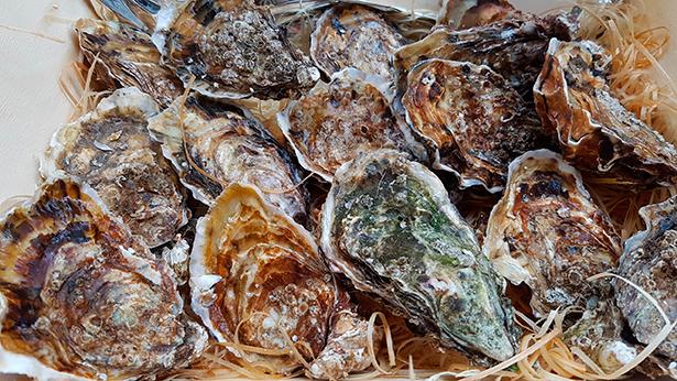 Las ostras no pueden faltar en la cena de fin de año | Foto: J. L. Conde