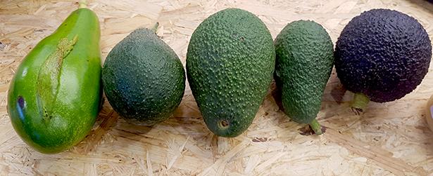 La ola del aguacate ha llevado a esta fruta a precios inasumibles para buena parte de la población | Foto: J. L. Conde