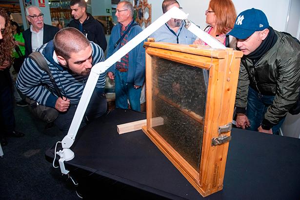 Asistentes a la feria observan las abejas negras, cuya miel es una de las mejor valoradas de la isla