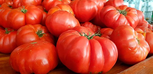 Tomates ecológicos | Foto: J. L. Conde