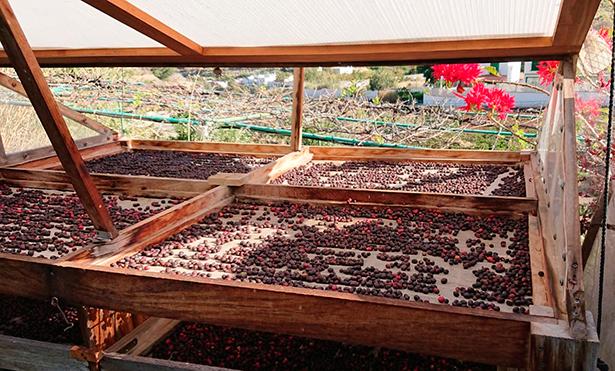 La formación se centró en el cultivo y proceso de transformación del café