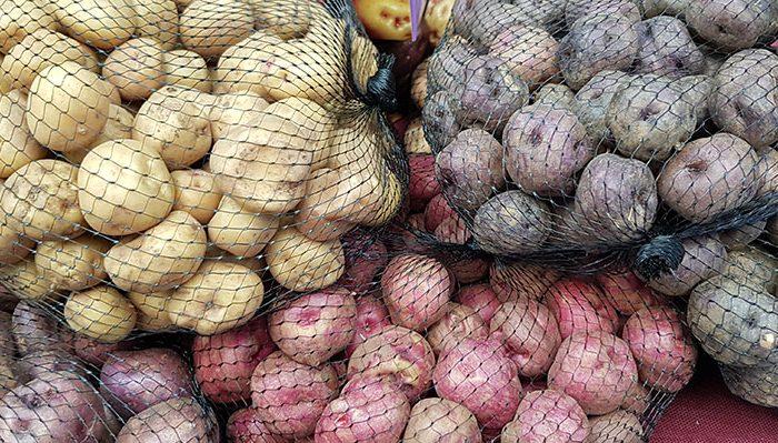 Variedades de papas canarias | Foto: J. L. Conde