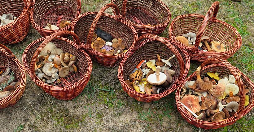 El próximo sábado se desarrollará la tradicional excursión para recoger setas