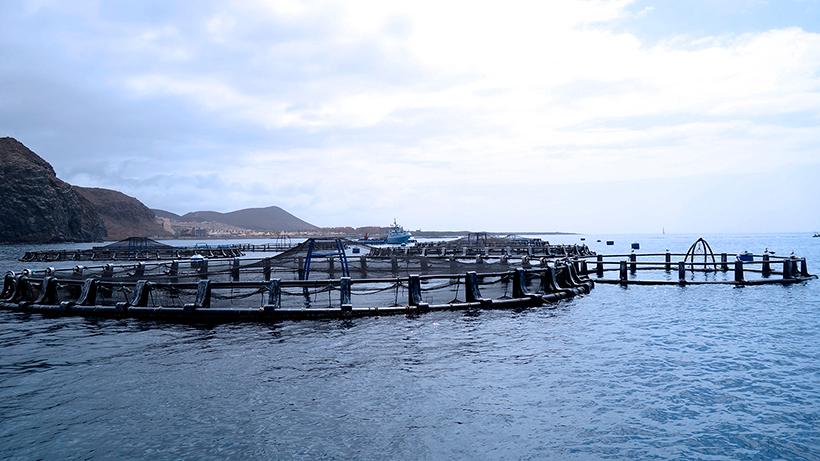 Instalaciones de acuicultura en la bahía de Los Cristianos