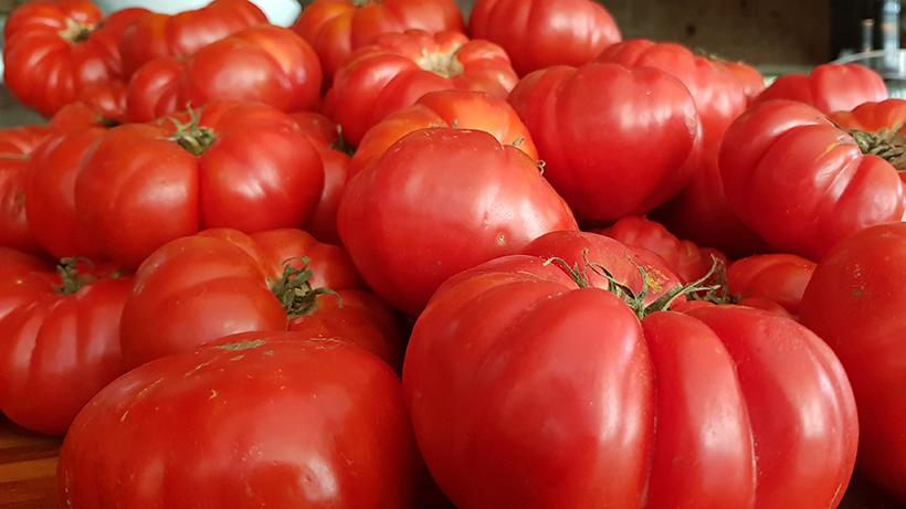 Tomates ecológicos de Guía de Isora | Foto: José L. Conde