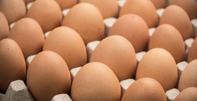 Gran Canaria produce y comercializa 700.000 huevos ecológicos, 4,3 millones camperos y 128,7 millones de unidades convencionales