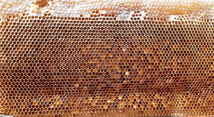 Panal de las colmenas de la Finca El Patio | Foto: José L. Conde
