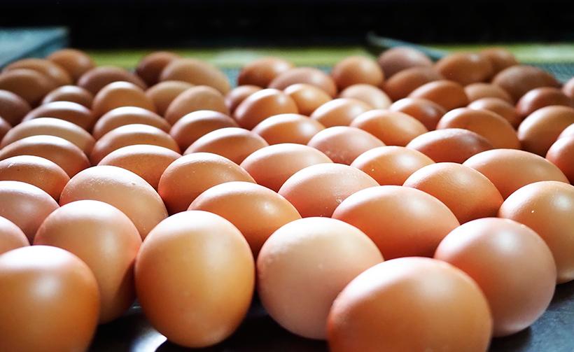 El código para identificar los huevos de Tenerife es 038 | Foto: Sergio Méndez