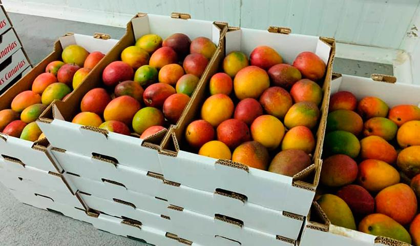 Mangos de El Hierro
