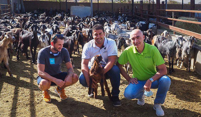 Cristian Barticel, Alberto Montesdeoca y Roberto Castro, con un cabrito en la Granja Montesdeoca   Foto: Sergio Méndez