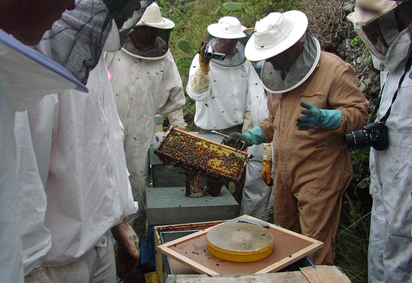 La producción de miel se ha visto mermada por la sequía