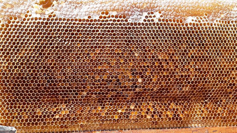 Panal de miel | Foto: José L. Conde