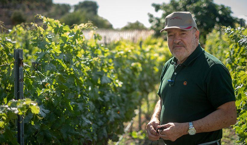 Miguel Concepción, fotografiado entre sus viñedos en Arico | Foto: Fran Pallero