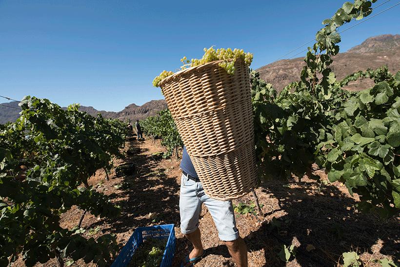 Tenerife ha conseguido 25 medallas en el Concurso Mundial de Vinos Extremos