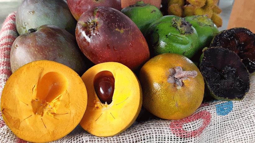 Frutas tropicales del vivero La Cosma | Foto: José L. Conde